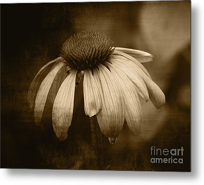 Metal Print featuring the photograph Coneflower In Sepia by Marjorie Imbeau