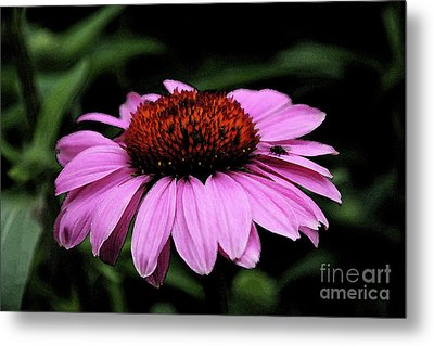 Coneflower With Bug Metal Print by Christiane Schulze Art And Photography