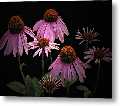 Coneflowers Metal Print by Judy  Johnson