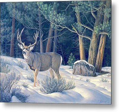 Confrontation - Mule Deer Buck Metal Print