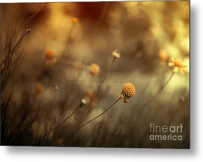 Connections Metal Print by Trish Mistric