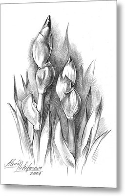 Conte Pencil Sketch Of Two Irises Metal Print