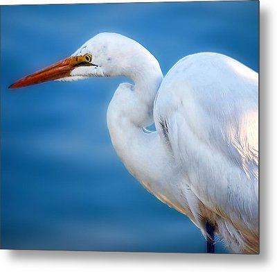 Contemplating Flight Metal Print by Camille Lopez