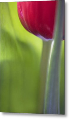 Contemporary Tulip Close Up Metal Print by Natalie Kinnear