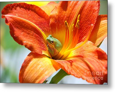 Content Metal Print by Kathy Gibbons