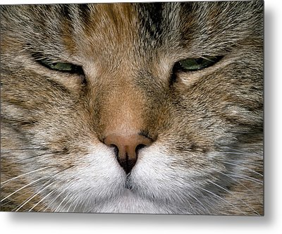 Contented Tabby Cat Abstract Metal Print