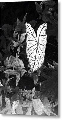 Metal Print featuring the photograph Contrast by Vonda Lawson-Rosa