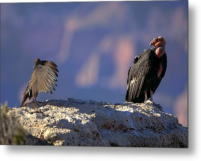 Conversation Metal Print by Kiril Kirkov