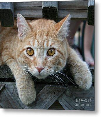 Cool Cat Named Calvin Metal Print by Karen Adams