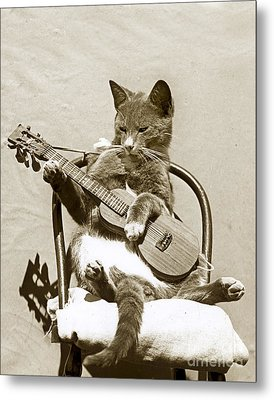 Metal Print featuring the photograph Cool Cat Playing A Guitar Circa 1900 Historical Photo By Photo  Henry King Nourse by California Views Mr Pat Hathaway Archives