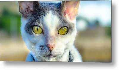 Cool Cat Metal Print by Tylie Duff