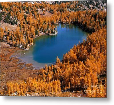 Cooney Lake Surrounded By Larch Trees Metal Print