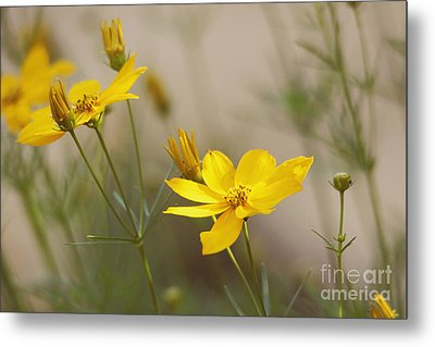 Metal Print featuring the photograph Coreopsis by Trina  Ansel