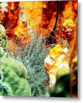 Metal Print featuring the photograph Corkscrew Anemone Grove by Amy McDaniel