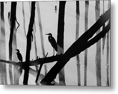 Cormorant And The Heron  Bw Metal Print