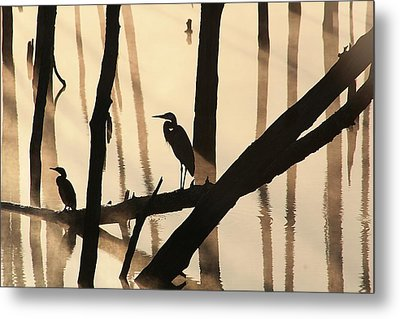 Cormorant And The Heron Metal Print
