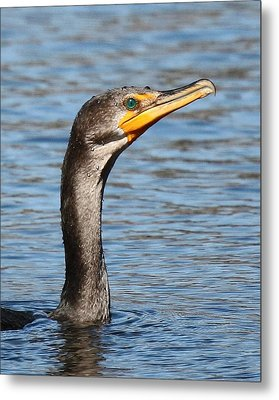 Cormorant Close 8x10 Metal Print