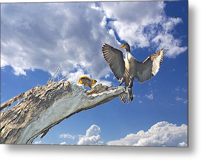 Cormorant Close Encounter With Tree Squirrel 1 Metal Print by Roy Williams