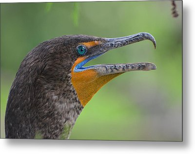 Cormorant Close Up Metal Print by Jodi Terracina