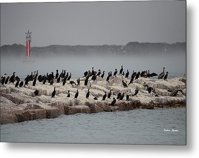 Metal Print featuring the photograph Cormorant Island by Debra Martz