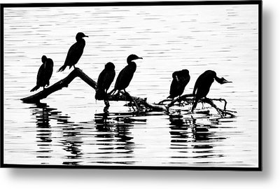 Metal Print featuring the photograph Cormorant Silhouettes by Geraldine Alexander