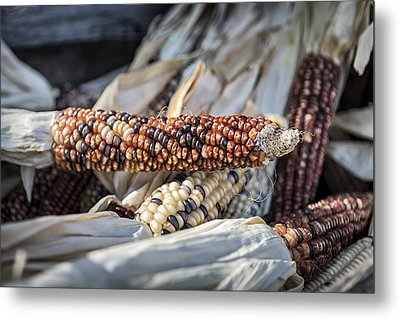 Corn Of Many Colors Metal Print by Caitlyn  Grasso