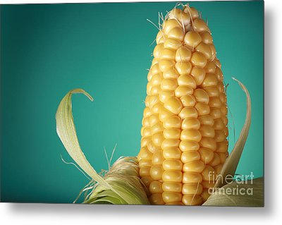 Corn On The Cob Metal Print by Sharon Dominick