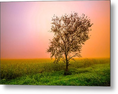 Cornfield Colors Metal Print by Brian Stevens