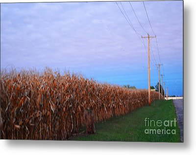 Cornfield In Autumn Metal Print by Luther Fine Art