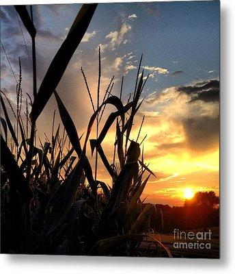 Cornfield Sundown Metal Print