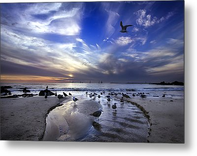 Corona Del Mar Metal Print by Sean Foster