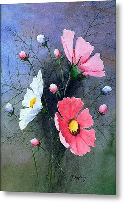 Cosmos  Metal Print by Jo Appleby