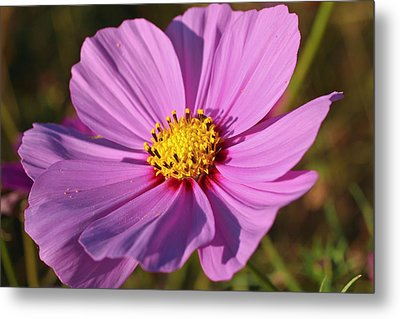 Cosmos Love Metal Print by Julie Andel