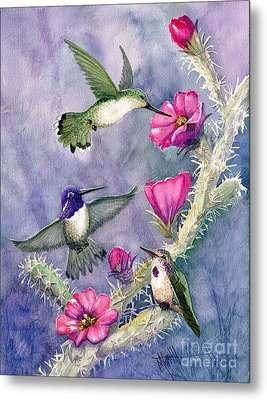 Costa Hummingbird Family Metal Print by Marilyn Smith