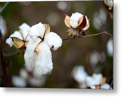 Metal Print featuring the photograph Cotton Creations by Linda Mishler