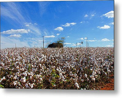 Metal Print featuring the photograph Cotton Field Under Cotton Clouds by Andy Lawless