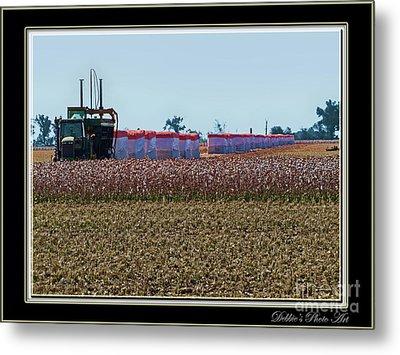 Cotton Harvest Metal Print by Debbie Portwood
