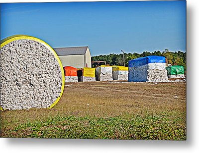 Cotton Harvest Metal Print by Linda Brown