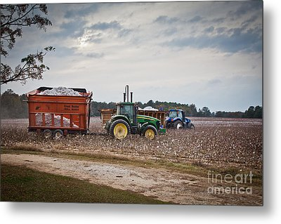 Cotton Harvest With Machinery In Cotton Field Metal Print