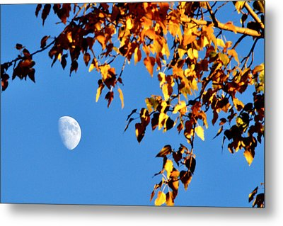 Metal Print featuring the photograph Cottonwood Moon by Jan Davies