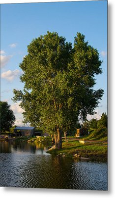 Cottonwood Metal Print