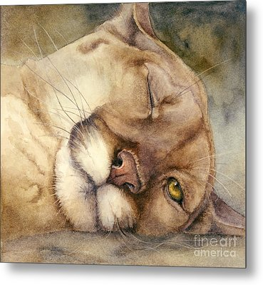 Cougar    I See You     Metal Print by Bonnie Rinier