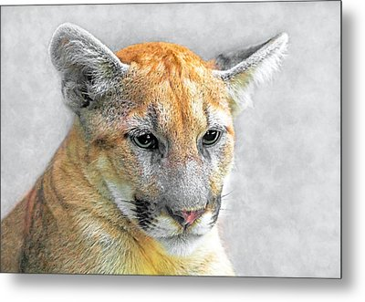 Cougar Metal Print by Marion Johnson