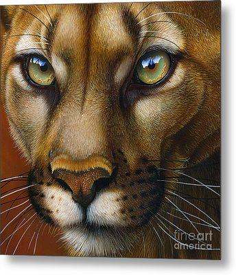 Cougar October 2011 Metal Print by Jurek Zamoyski