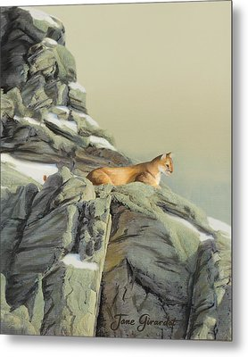 Cougar Perch Metal Print by Jane Girardot