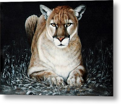 Metal Print featuring the painting Cougar Waiting by DiDi Higginbotham