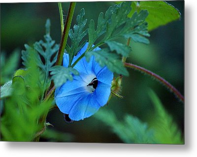 Country Blue Metal Print by Kim Pate