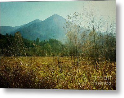 Metal Print featuring the photograph Country Drive by Sylvia Cook