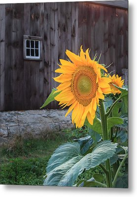 Country Flower Metal Print by Bill Wakeley