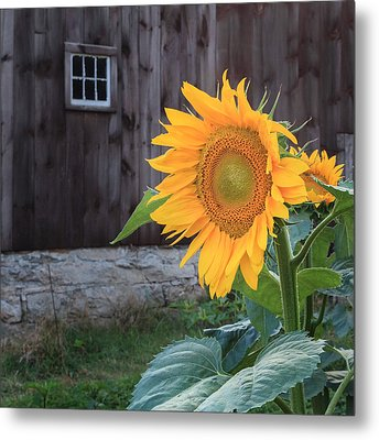 Country Flower Square Metal Print by Bill Wakeley
